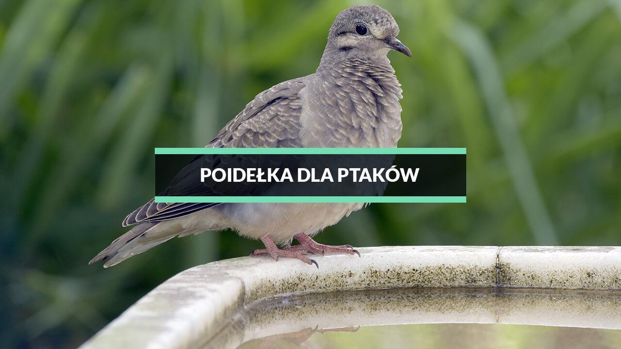 poidełka dla ptaków