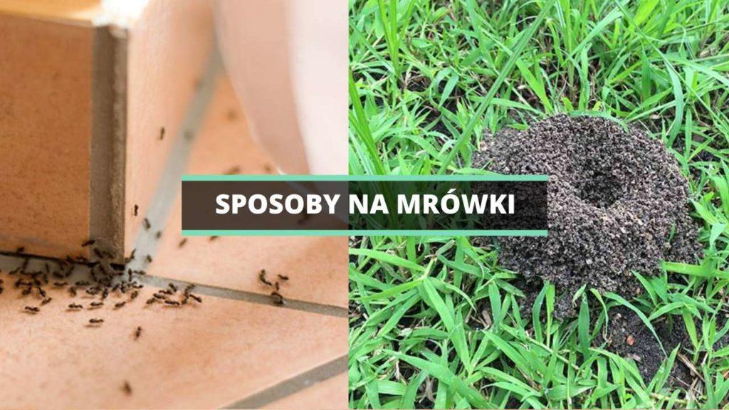 Domowe sposoby na mrówki - jak pozbyć się mrówek w domu i w ogrodzie?