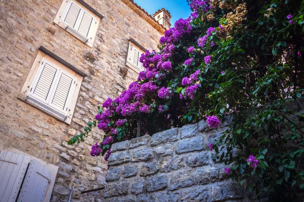 Dzwonki kwiaty w kamiennej donicy