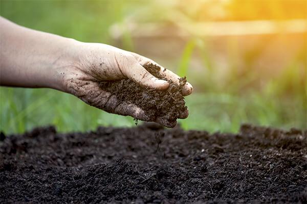 rodzaje ziemi pod trawnik