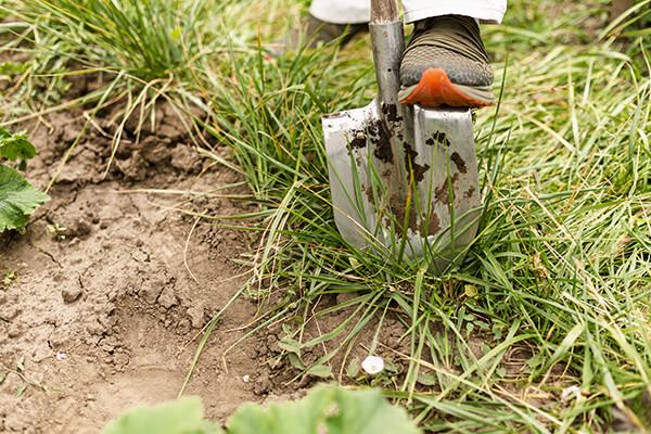 przygotowanie podłoża pod trawnik